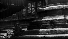 _DSC1729_B&W_cropped_resized (The Shutter Shaman) Tags: nepal zeiss sony kathmandu za f28 ssm monkeytemple 2470mm swayambhunath slta99v