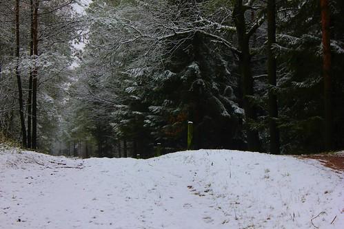 "Im Winterwald (mit Schnee) • <a style=""font-size:0.8em;"" href=""http://www.flickr.com/photos/69570948@N04/16249245378/"" target=""_blank"">View on Flickr</a>"