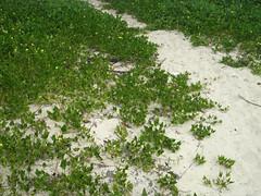 Camino al manglar (Alveart) Tags: island colombia bolivar cordoba caribbean caribe puertolimon suramrica lationamerica islafuerte alveart puertolimonislafuerte luisalveartisla
