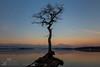 Milarrochy Bay tree (GenerationX) Tags: pink blue mountains tree water sunrise reflections landscape dawn mirror bay scotland still rocks unitedkingdom roots scottish neil calm single trossachs lochlomond isolated barr luss inchlonaig millarochy beinnime