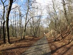 Weg Mhlburg (germancute) Tags: flower castle nature germany landscape deutschland thringen spring thuringia blume landschaft mhlberg burg mhlburg germancute