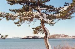 View to Balley's Hill across the Dorothy cove (gmushinsky) Tags: northshore nahant supertakumar zenit19