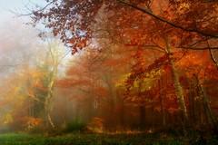 Foglight (BphotoR) Tags: autumn light sun fog canon germany licht nebel hessen herbst foliage odenwald g10 weschnitztal bphotor