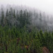 West Coast low cloud - Vancouver Island, BC