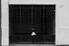 Seres (Medigore) Tags: chile street santiago byn blancoynegro blanco 50mm calle y negro perro sombras monocromtico medigore canont3i