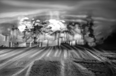 Untitled116_2016 (Jonny Bell) Tags: trees summer blackandwhite abstract blur pine suffolk graphic icm scots multipleexposures jonnybell