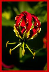 AH62_8317 (der_andyrandy) Tags: blume blte macro rot canoneos7d outdoor natur amazingamazing thisphotorocks wow