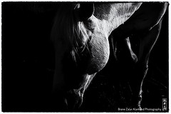 in the shadow (alamond) Tags: light shadow bw horse white france canon whisper gray monochromatic 7d l usm provence ef f4 1740 mkii camargue markii brane llens alamond zalar