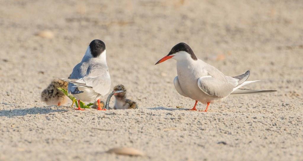 Long Island Ny Bird Feeding