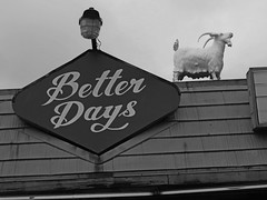 I would rather vote for a goat than Hilary or Trump. (kennethkonica) Tags: city urban blackandwhite usa signs building wall america canon midwest random outdoor indianapolis text indy goat indiana economy betterdays global canonpowershot hoosier airconditioningunit marioncounty smallbusiness