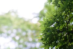 Dark Green of Summer (HARUYA.U) Tags: nagoya summer eos7d 7d sigma green