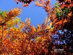 DAO-83900 (Chen Liang Dao  hyperphoto) Tags:   taiwan