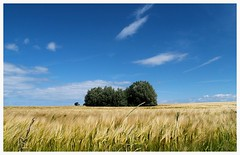 (czorneboh) Tags: blue trees sea sky field germany landscape feld himmel baltic insel landschaft bume ostsee mecklenburg neuhof poel