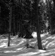 Winter_Walk_Halifax_2015 (Herb) Tags: agfaapx100 caffenolc