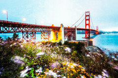Wildflower Bay (Blende57) Tags: sanfrancisco sanfranciscobay sanfranciscobaybridge sf bay bridge water flowers wildflowers wideangle longexposure nature outdoors wind