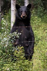 BC Vacation 2016-07-19 031 (Roger's Eye <(r)>) Tags: bulkleynechakob britishcolumbia canada ca