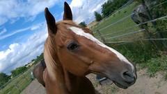 Pferd bei Framersheim