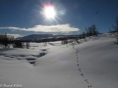 IMG_3482.jpg (kitlo59) Tags: vinter landskap myrland