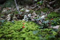 Through the forest (kevinmboots77) Tags: lego legography starwars stormtroopers scouttroopers forest outdoors