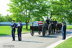 ARL_2511-s (lauren3838 photography) Tags: lauren3838photography laurensphotography nikon d700 funeral arlington arlingtonnationalcemetery military airforce caisson horses usa flag veteran casket cia pilot va virginia cemetery soldiers burial