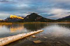 Golden- October 17, 2016 (zachary.locks) Tags: 3rd ab alberta alpenglow angle autumn banff ca canada changing clouds cloudy colors cy365 driftwood fall foreground golden hour lakes log low mountains mt national park rocks rundle still sunset third vermillion warm water zlocks