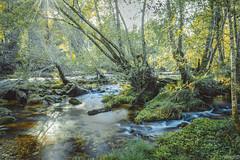 Aguas (ivandabouza) Tags: agua rio ourense galicia naturaleza verde arboles