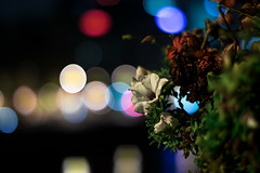 IMG_5761 (Lens a Lot) Tags: smc pentaxm 50mm f14 1984 | 8 blades iris pk mount paris 2016 bokeh color flower night light vintage manual classic japanese japan prime fixed length lens pentaxm50mm14