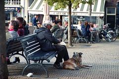 Dog dinner (Arne Kuilman) Tags: iso200 agfa agfacolor nederland netherlands film scan v600 nikon f100 28105 af 200n dog hond man bankje bank delft markt cafdeengel