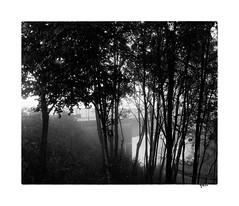 Brume (gravelin.yves) Tags: arbre brumes doubs flore genre paysage pont rivires rue urbain vaire