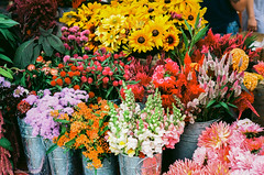 TSD_RAW_161021-34 (DohertyTim) Tags: ektar100 farmersmarket flowers ma scan somerville unionsquare