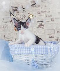 Kitty (MiuMiuKitty) Tags: cats cat kitten kitty kittens