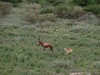 Botswana Hunting Safari 58