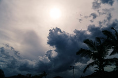 storm coming this afternoon (Jackie888) Tags: summer sky storm tree clouds australia palm mygarden mysky
