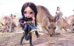24 Nov 2014...the Kangaroo Whisperer