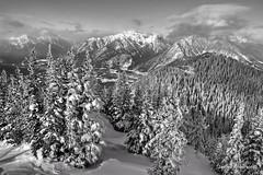 Snow Splendor (JA.Photography (1/3rd of it will be interesting)) Tags: blackandwhite canada mountains monochrome rocky alberta banff bowriver sulphurmountain ban