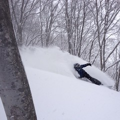 #japow in Buna trees #Hakuba ジャパウ?最高!