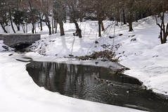 Creek with Ducks at Glen Falls, Williamsville N.Y. ( Kimberly Collignon - All Rights Reserved) Tags: snowflake bridge november blue trees winter red sun white lake snow ny newyork cold building tree green bird history mill ice water leaves birds rock stone creek swimming river bench four snowflakes grey frozen duck pond buffalo mainstreet rocks stream december glow bright stones january ducks sunny brooke pebbles freeze historical glowing snowing brook willie temperature february icy freezer benches amherst watermill willy colder blustery babbling wintery wintry emptytree williamsville glenfalls oldredmill townofamherst villageofwilliamsvile
