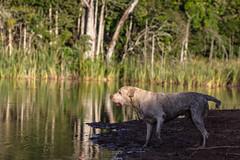 (Andre Zuin) Tags: trees dog naturaleza pets nature water animals lago agua natureza perro cachorro bichos arvores animais