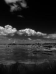 01286 (~maxi) Tags: blackandwhite seaweed clouds beaumaris portphillipbay rickettspointmarinesanctuary
