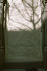 Welcome Mat (pop archaeologist) Tags: city nyc light shadow newyork tree film vertical brooklyn kodak parkslope f90 expired brownstone nikonn90 royalgold400 boardeddoor
