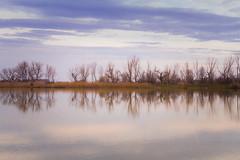 (molinete77) Tags: trees reflection water landscape rboles reflejo