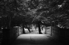 Adventures in the Homeland (Olivia Darby) Tags: nottingham bridge trees light england woodland university shade dreamy magical eastmidlands