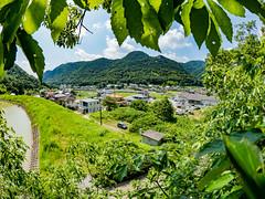 PhoTones Works #8011 (TAKUMA KIMURA) Tags: photones olympus air a01 takuma kimura   landscape scenery nature tree leaf town residential house