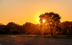Good night (Wenninger Johannes) Tags: sun sunset sunsets sunsetlovers sonne sonnenuntergang natur nature naturfoto naturephotography naturfotografie naturephoto baum tree landscape landschaft landscapes landschaften linz austria sterreich hss