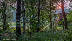 2016-07-24-05-17-50-DSCF5102-HDR (tsup_tuck) Tags: 2016 hdr july moscow summer woods