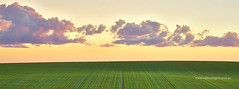 Greenfield Panorama (Valley Imagery) Tags: panorama landscape australia green crop farm sunset sa south cloud orange valleyimagery barossa valley gawler sandy creek outdoor