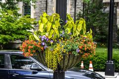 downtown Princeton NJ (Dotsy McCurly) Tags: downtown princeton nj flowers beautiful nikon d750 dof plants