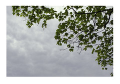 2. Into the trees (LouSmith52) Tags: summer cloud tree green leaves clouds cloudy muted