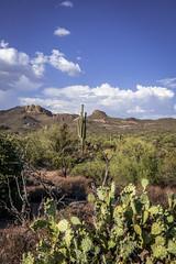 Apache Trail (Ruggero Poggianella Photostream ) Tags: arizona usa phoenix phoenixaz 2016 indiantrail usa2016