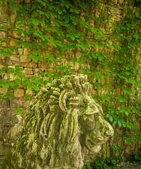 Gardenian-1078 (david_doyle_photo) Tags: italy farmhouse jack hiking tuscany bologna pienza montepulciano bagno romanbaths bomarzo civita orvieto 0516 gardentour sanquirico viafrancigena dccrew lafocegarden may2016 sacroboscogarden